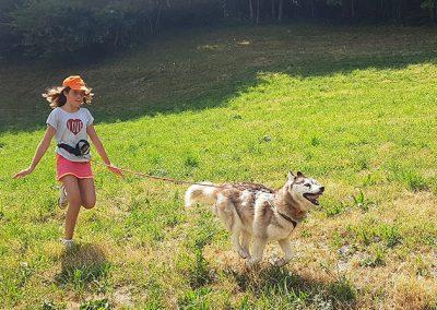 chiens-traineaux-ete-megeve