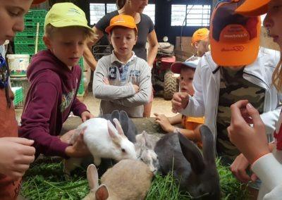 Lapins à la ferme (Medium)